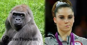 gorilla is not impressed